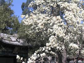Palacio de Verano del Emperador- Beijing