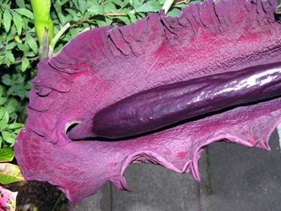 The World's Most Unusual Plants and flowers 04