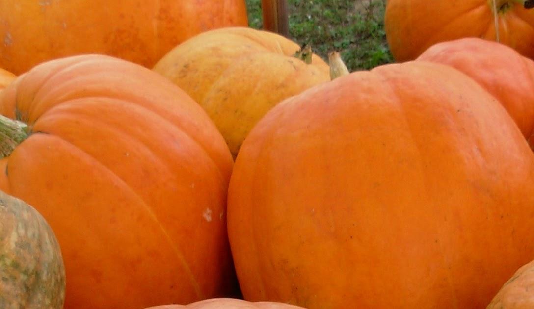 Round Barn Potting Company Pumpkin Patch Home Grown