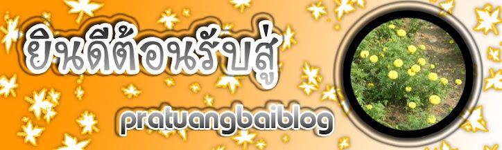 pratuangbaiblog