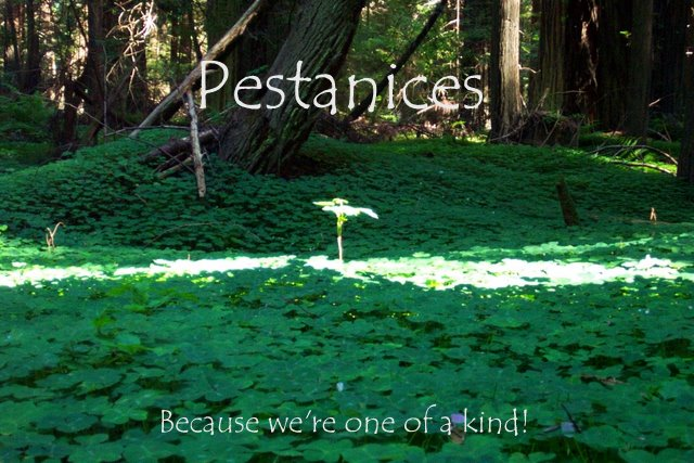 Pestanices