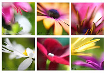 MY FLOWER ART: See them on Jean Lannen Images. Email me to purchase.