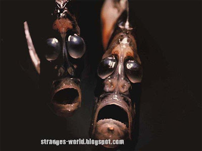 Strange sea creatures @ strange picture