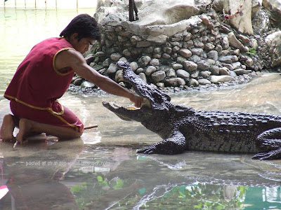 Crocodile wrestlers @ strange world