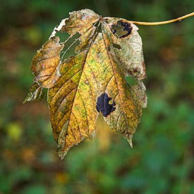 Døende blad