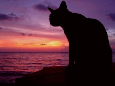 Kat ved solnedgang