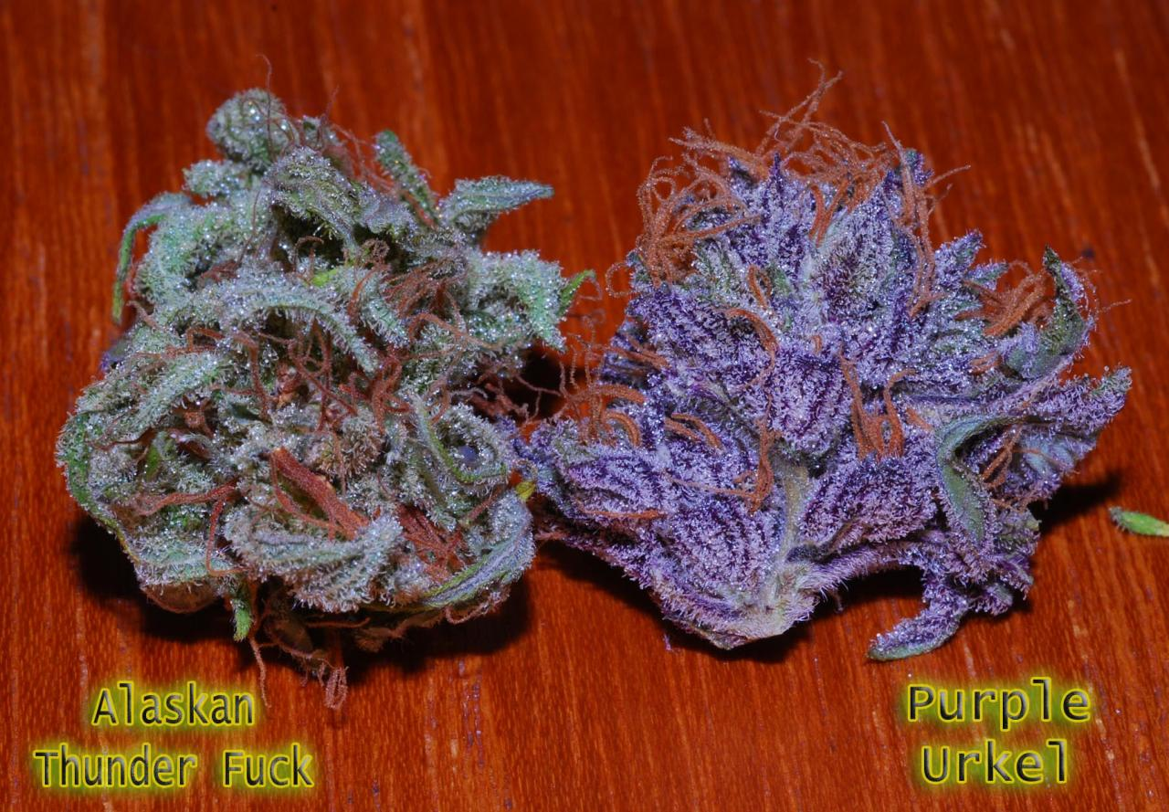 What Are Your Top 5 Strains ? | Page 2 | FC Vaporizer ...