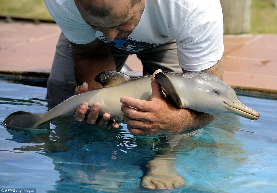 Cute Baby Dolphin Saved From Death Likepage