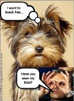 Se virem este cão, ajudem-no!