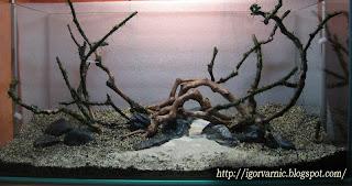 Setup Planted Tank