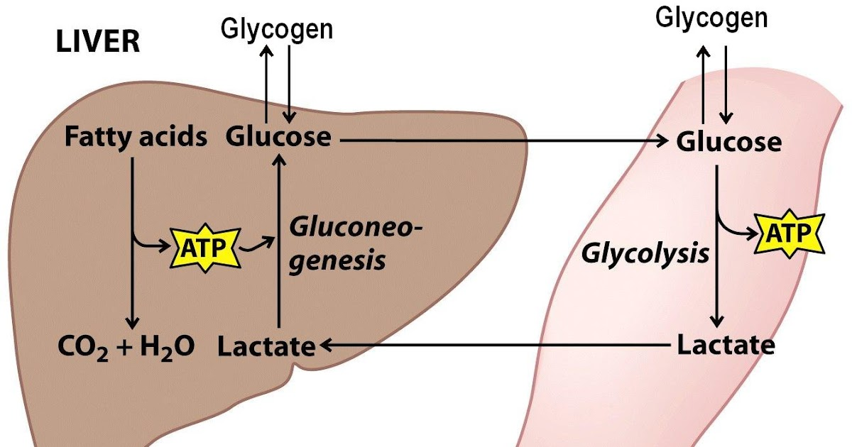 sandwalk glycogen storage diseases