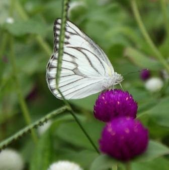 http://4.bp.blogspot.com/_D_FJU15AaxA/SkeMtEtqy-I/AAAAAAAABQo/B7g9zdlsGcE/s1600/butterfly+-+science+city.JPG