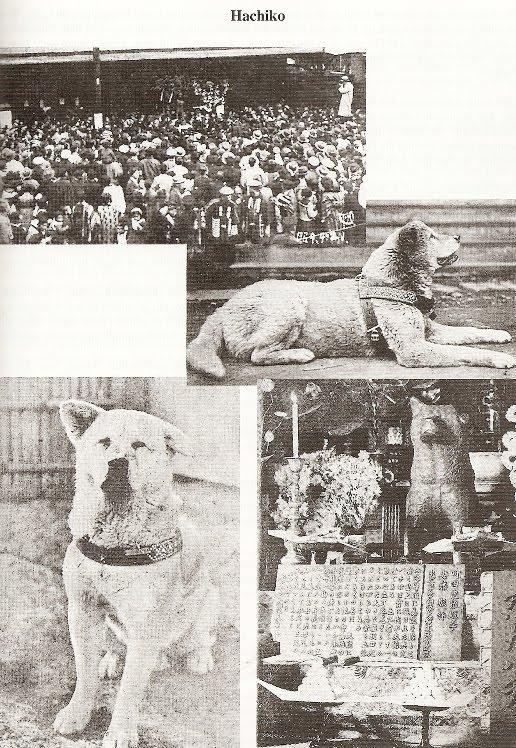 expert on Akita breed saw O Akita Hachiko