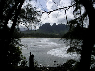 Ocean Scene with Trees - Kauaii, Hawaii