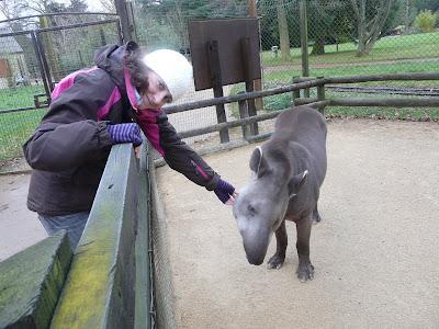 Sarah Cooper with lowland tapir at Cotswold Wildlife Park, 2008