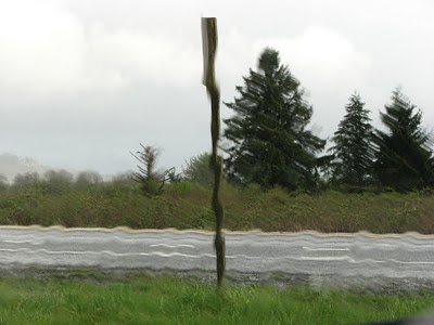 Tree shapes through the rain, Warrenton, Oregon