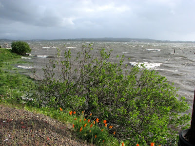 Stormy Weather on Young's Bay, Astoria, Oregon