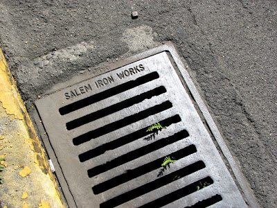 Salem Iron Works Drain Cover in Astoria, Oregon