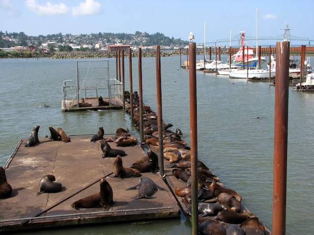 Sea Lions on the Dock, Astoria, Oregon