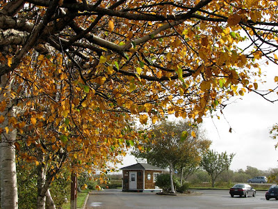 Autumn Leaves and Coffee Kiosk, Warrenton, Oregon
