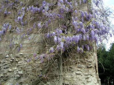 Roman Forum with Wisteria