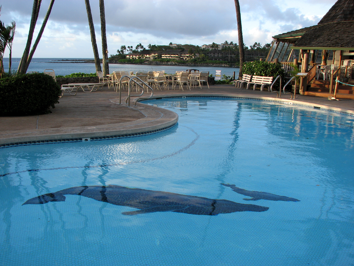 Whales in the Swimming Pool, Maui