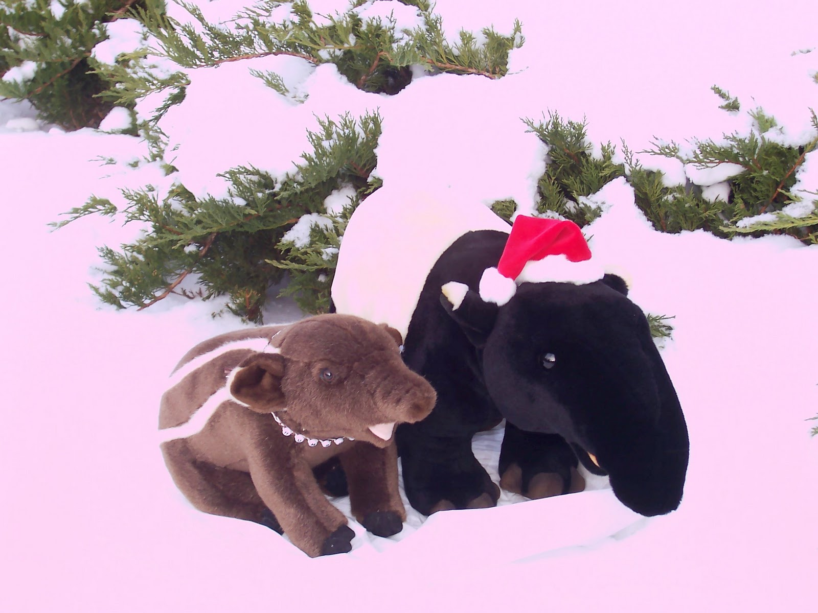 Christmas tapirs in the snow