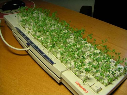 Keyboard Grass Prank