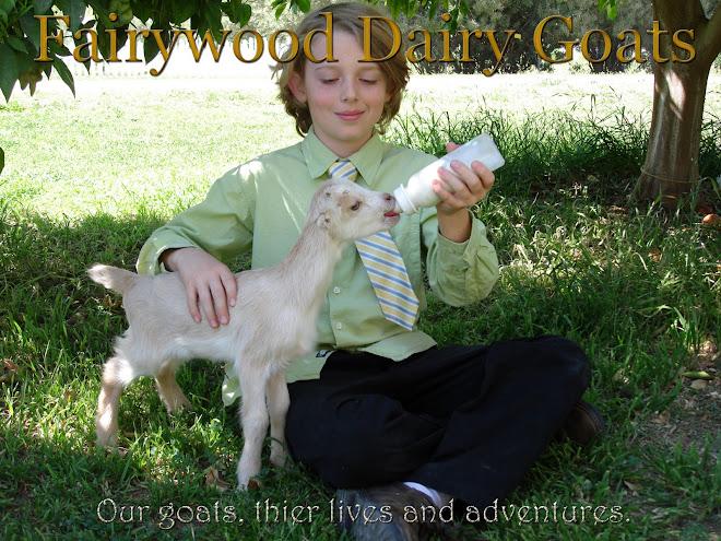 Fairywood Dairy Goats