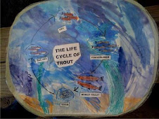 Life Cycle of Trouts