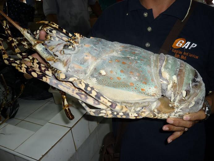 Lobster Labuan size XL rm450
