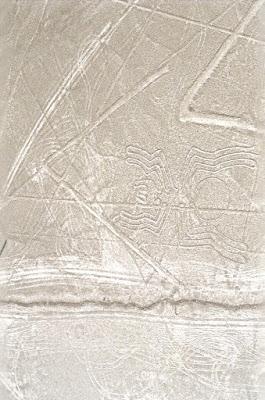 Paianjenul de la liniile Nazca