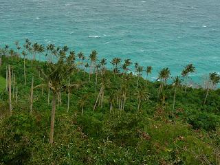 palmieri, peisaj luxurian Filipine