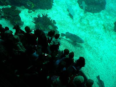Imagini Portugalia: Oceanarium Lisabona