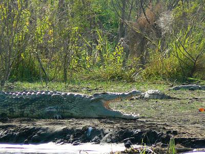Imagini Etiopia: lacul Chamo, crocodil