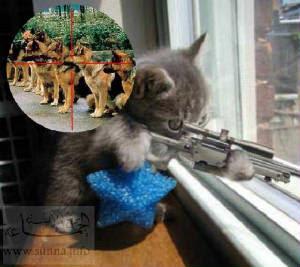 Funny Cats pics cats funny
