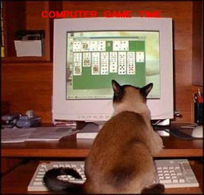 Funny animal photo: Cat playing computer game 动物搞笑图片:猫咪打电动