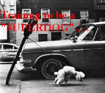 Animal funny picture: Superdog 动物搞笑图片:超级狗