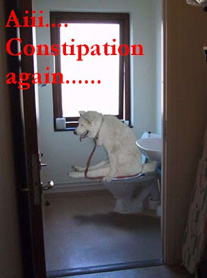 funny photos of constipation doggy..搞笑图片之狗狗便秘..