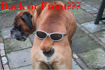 Animals funny photo of sunglasses vs doggy..宠物搞笑图片之太阳眼镜 vs 狗狗..