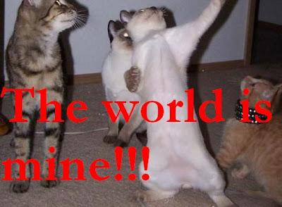 Funny photo:Cat's day dream 爆笑图片:猫的白日梦