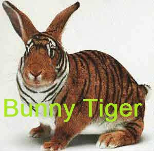 funny photo:funny rabbit 搞笑图片:搞笑兔子