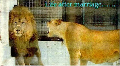 Animal funny picture:Life after marriage 搞笑动物贴图:婚姻生活