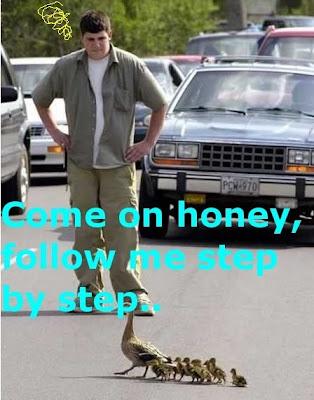 Funny Human and Ducks: Road crossing ducks
