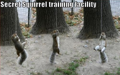 Funny Pictures: Squirrels' secret training