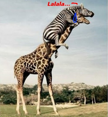 Funny Pictures: Funny Zebra