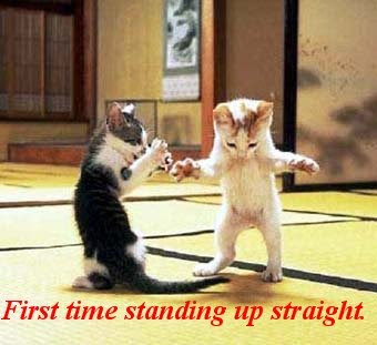 Funny Pictures: Funny cute standing cats