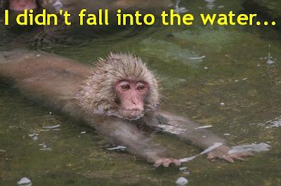 Funny Pictures: Swim