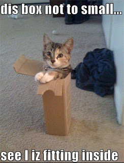 Cat In A Box - Pictures of Funny Animals (cat funny picture)