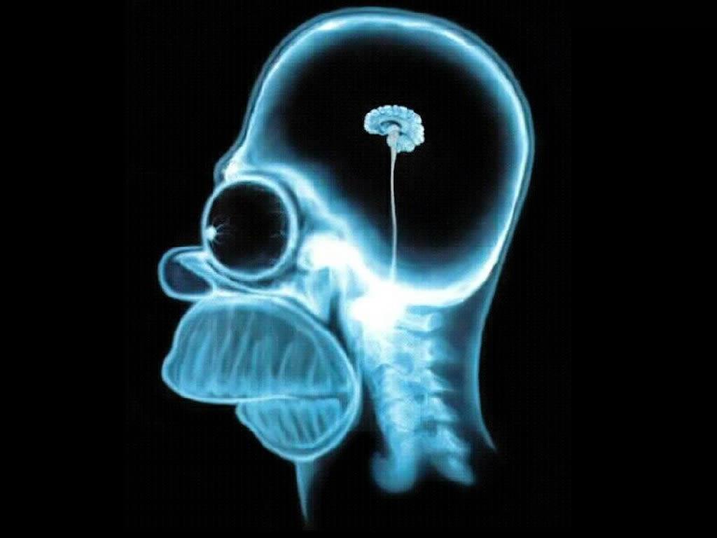 http://4.bp.blogspot.com/_DhOrQiNpiBU/S9LOCztEjkI/AAAAAAAAAgQ/lzg7oJ3aZec/s1600/homer-simpson-wallpaper-brain-1024.jpg